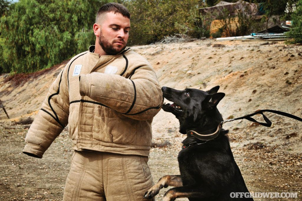 Dogs for Defense: Considerations for Getting a Protection Dog